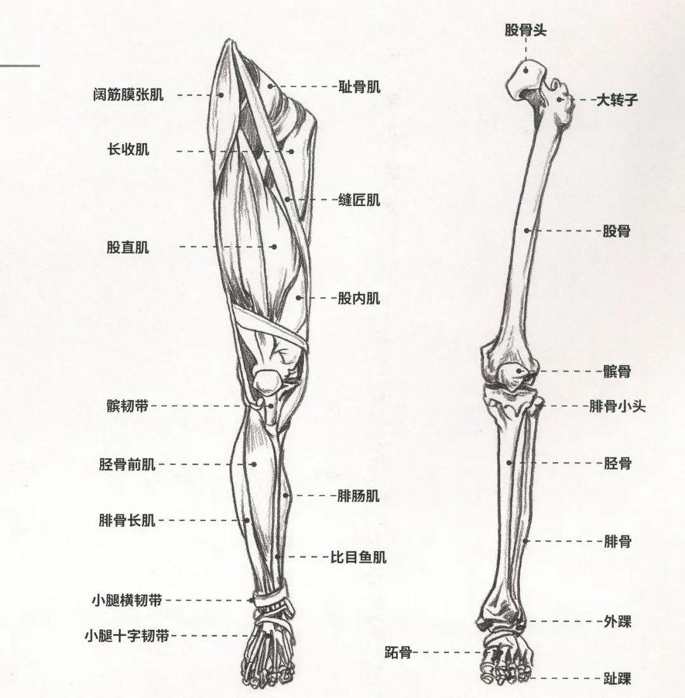 杭州艺考画室超强干货丨速写下肢怎么画?观察是关键,03