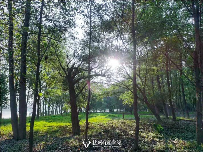 杭州艺考画室这个夏天欠下的宴会债,现在还,05