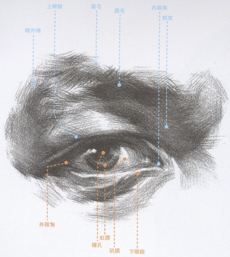 杭州艺考画室教你刻画素描头像中的眼镜、帽子和围巾,01