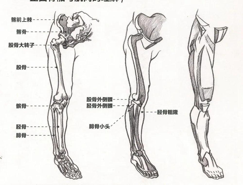 杭州艺考画室超强干货丨速写下肢怎么画?观察是关键,06