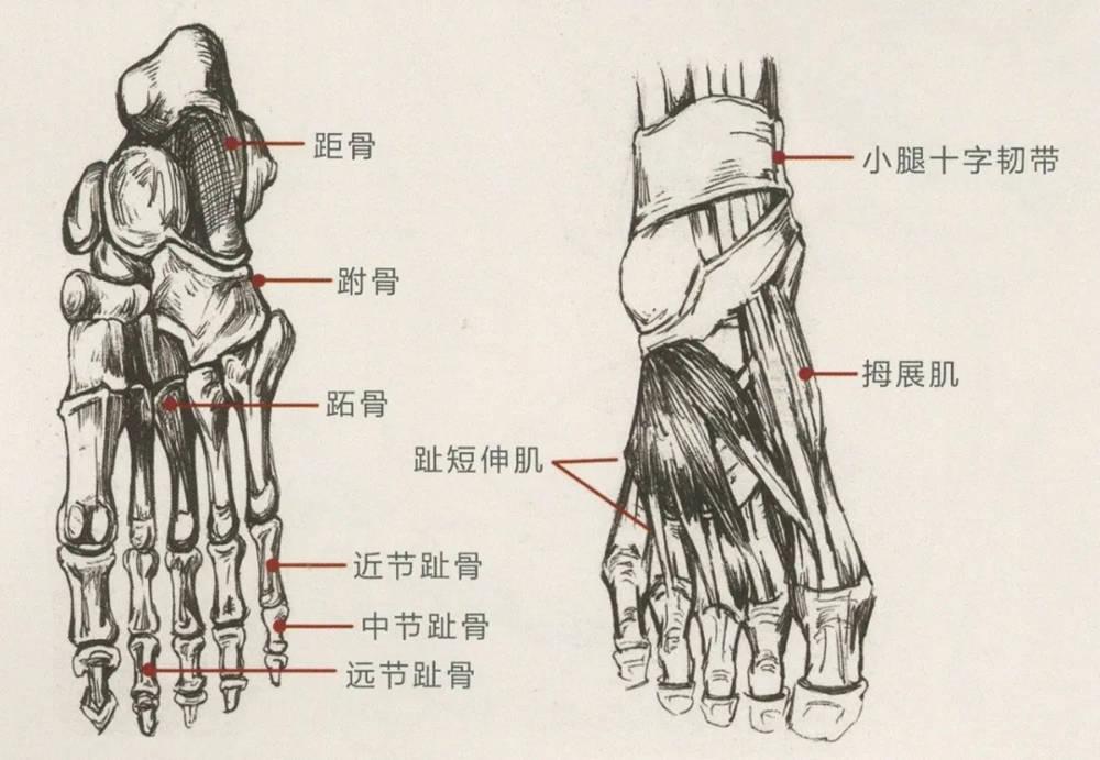 杭州艺考画室干货丨速写脚部很难?送你一百双鞋子的范画,01