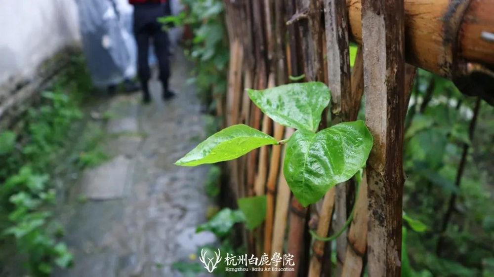 杭州艺考画室白鹿写生季 | 秋天的第一场写生未完待续,27