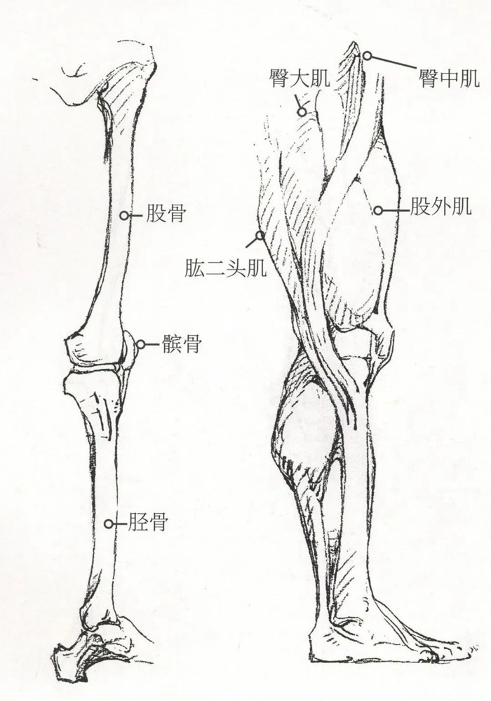 杭州艺考画室超强干货丨速写下肢怎么画?观察是关键,04