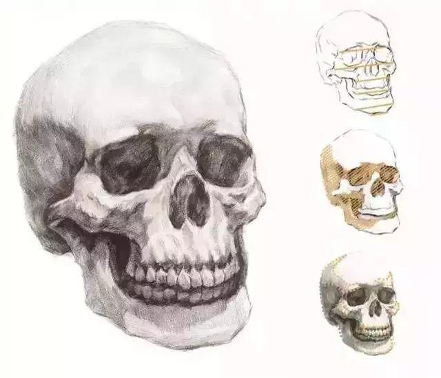 想画好人物素描,为什么一定了解骨架?杭州艺考画室告诉你,04