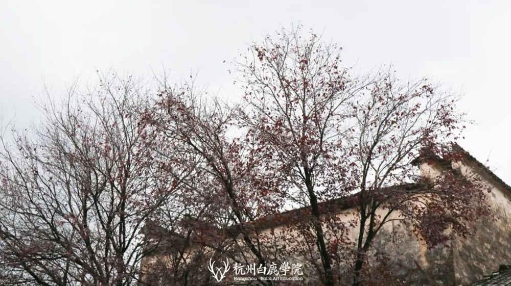 杭州艺考画室白鹿写生季 | 画画的Baby们安全抵达写生地啦,46