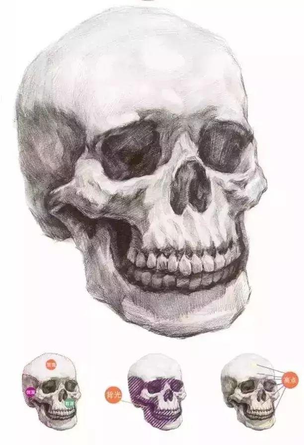 想画好人物素描,为什么一定了解骨架?杭州艺考画室告诉你,05